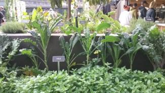ATTPark_Garden 6