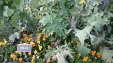 ATTPark_Garden 9