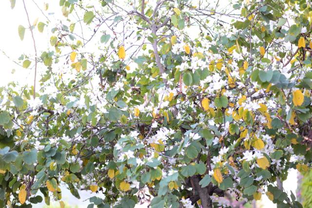 white tree flowers M Loves M @marmar