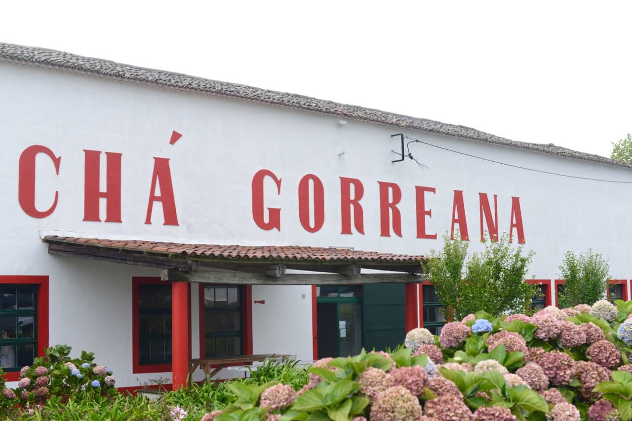 cha gorreana tea tasting in sao miguel