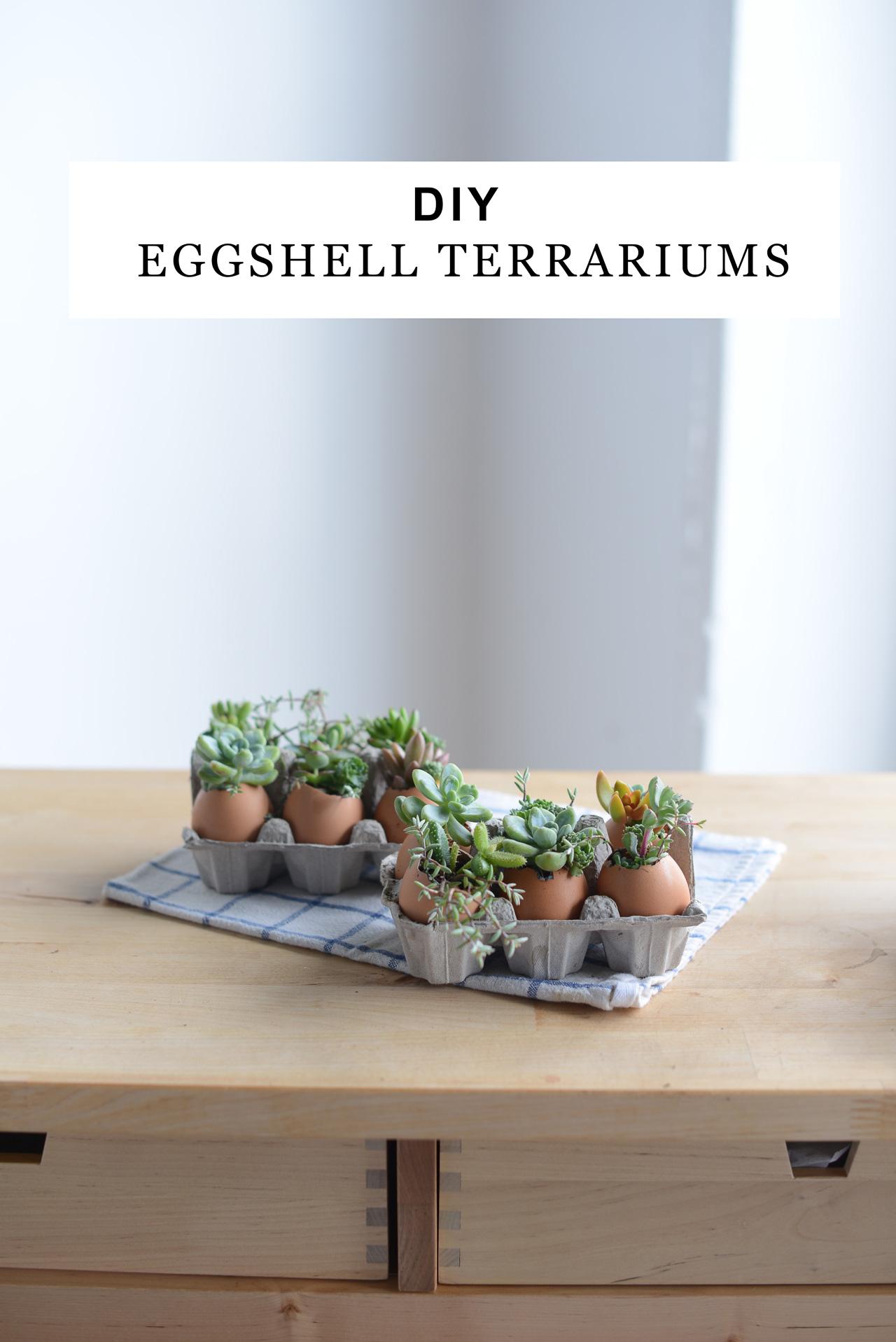 How to DIY a eggshell terrarium! | M Loves M @marmar