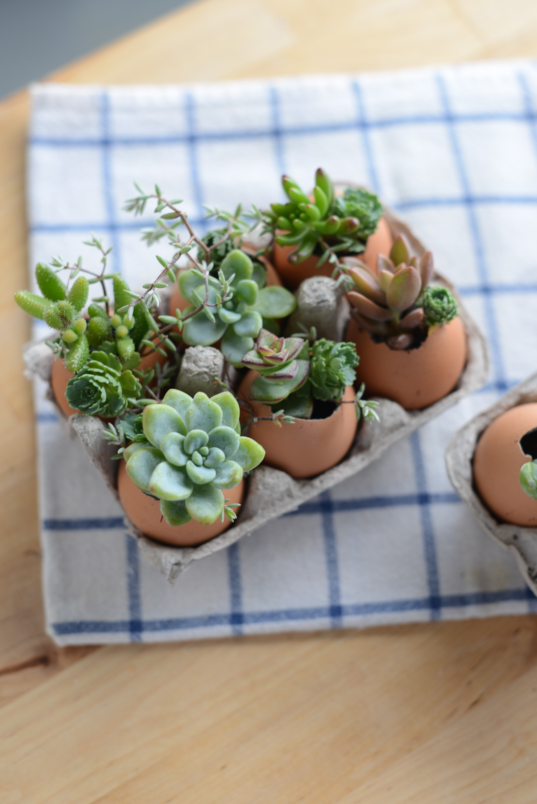 How to DIY a eggshell terrariums! | M Loves M @marmar