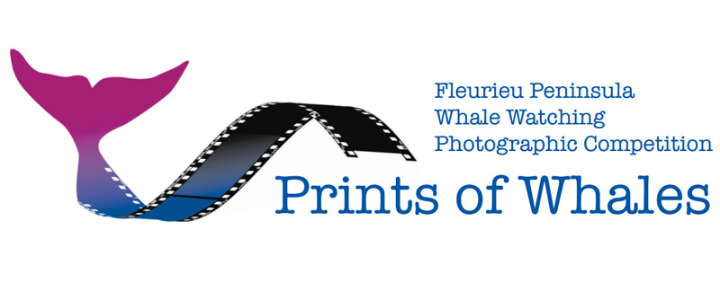 prints of whales - fleurieu peninsula whale watching photography competition