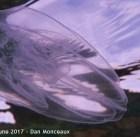 Bolinopsis, Port Bonython 2017 - Dan Monceaux