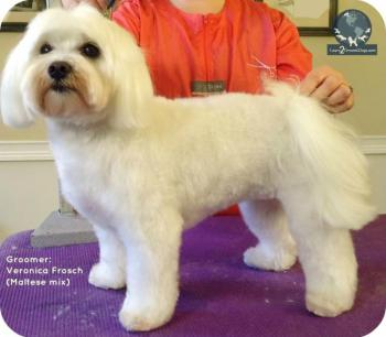 I Want A Puppy Cut Be A Better Groomer