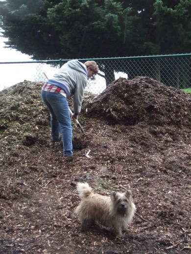 Cannon works on one of the wood chip piles with Sassi supervising.