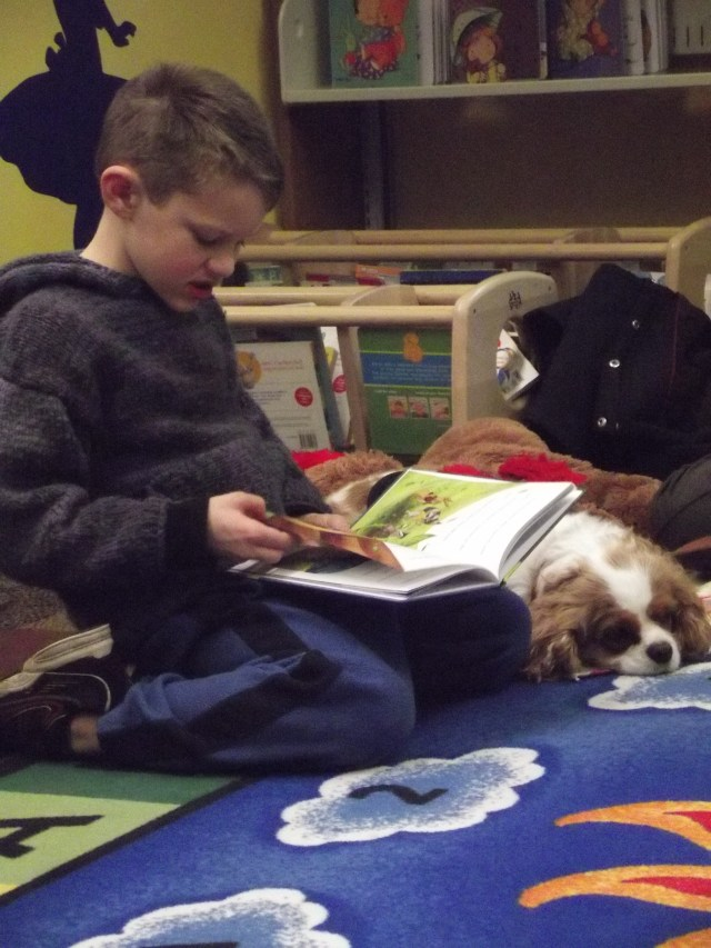 Reading with Rover program at the MLT Library this morning. The program runs the third Saturday of each month, and brings in therapy animals that young school-age kids can read out loud to. In the first photo is Finn Dilling, a first grader at Mountlake Terrace Elementary, reading to Lily (the dog).