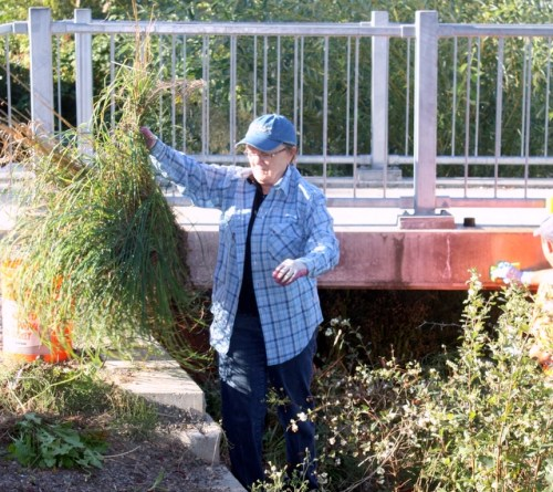 Helen Jeremiah participates in the Parks Volunteer Cleanup Day at Ballinger Park.
