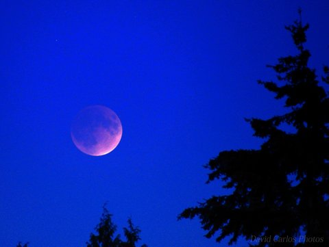 Supermoon Lunar Eclipse, Mountlake Terrace, 9-27-15