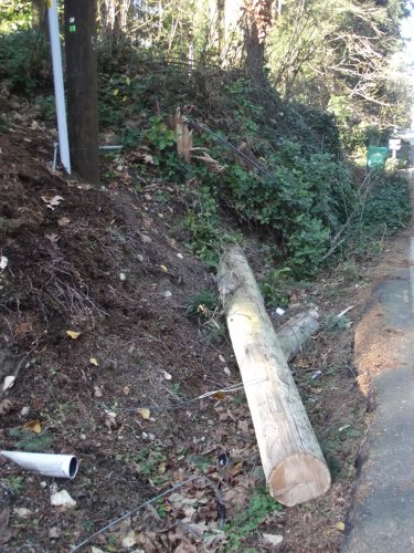 A utility pole along side Atlas Road snapped near its base after trees fell across its lines on Nov. 17.