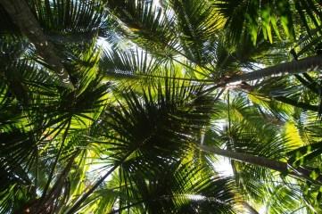 The famous kentia palms.