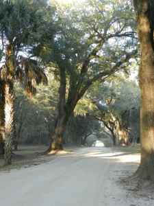 Lowcountry Road