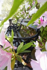 Wrought-Iron Bench at White Point Gardens
