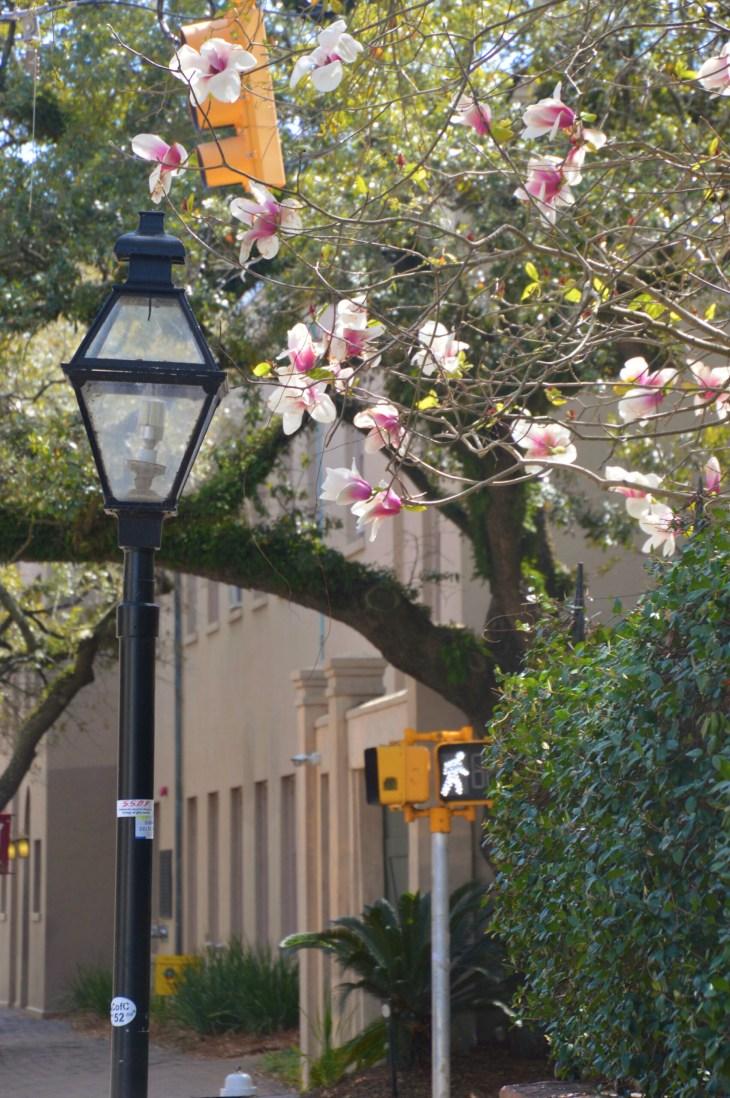 Spring on Campus
