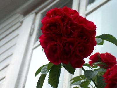 roseklase