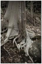 untitled shoot-2546-2