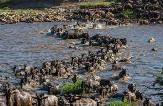 Grande migration voyage de noces en Tanzanie expérience atypique