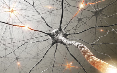 Feinstein Institute for Medical Research researchers reviewed the link between the nervous system and the immune system in an analysis published in the Annual Review of Immunology.