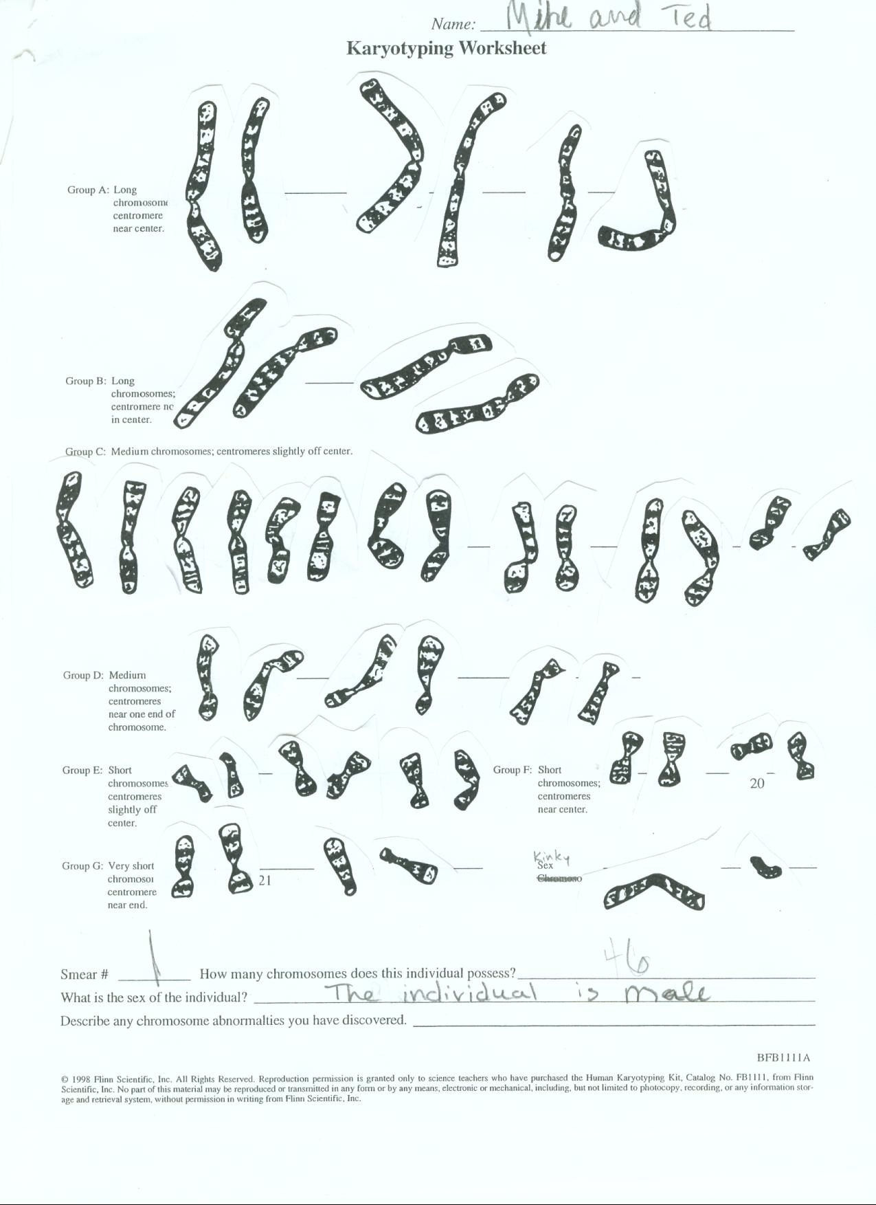 Chromosomes And Karyotypes Worksheet Tutore