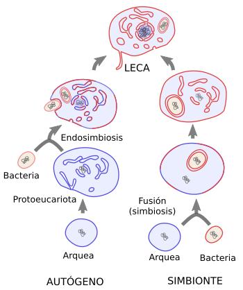 Origen de las eucariotas