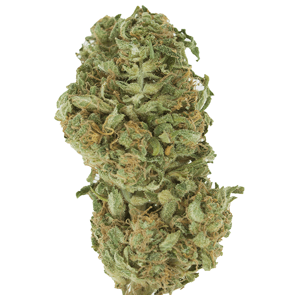 CBD Moby Dick - Sativa Dominant