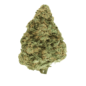 UK Cheese - Sativa dominant