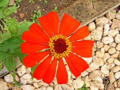 Happy_flower_3