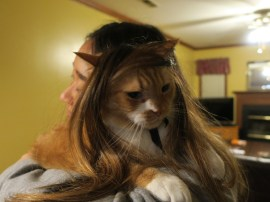 Binky and the Wigs