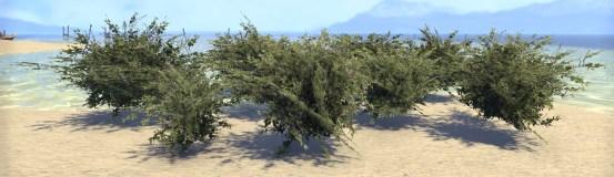 Bushes, Ivy Cluster