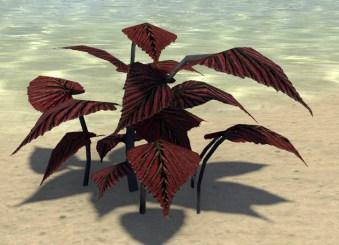 Plants, Scarlet Sawleaf