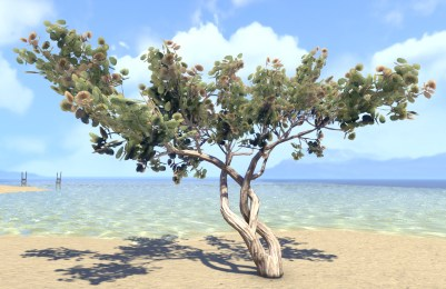 Sapling, Sea Grapes