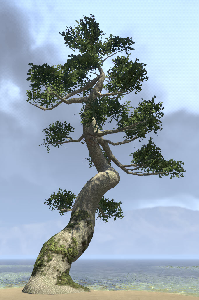 Tree, Ancient Summerset Spruce