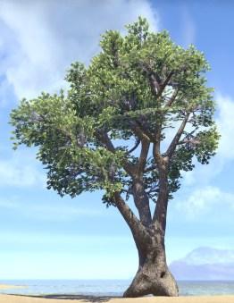 Tree, Upstretched Shade