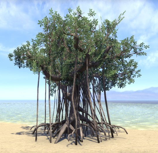 Tree, Young Mangrove