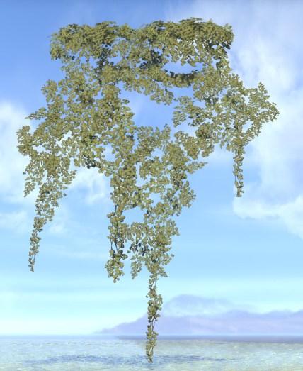 Vines, Sun-Bronzed Ivy Swath