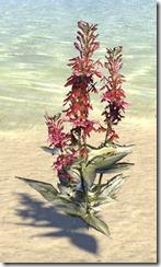 Plant, Cardinal Flower 1