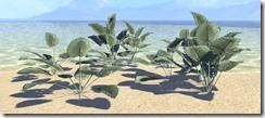 Plant Cluster, Spadeleaf 1