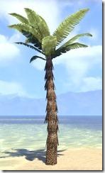 Plant, Marsh Palm 1