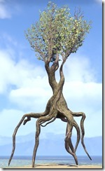 Tree , Banyan 1