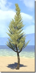 Tree , Marsh Cypress 1