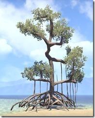 Tree , Mire Mangrove 1