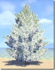 Tree, Snowy Fir 1