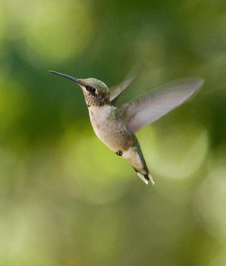 Noi piccoli colibrì