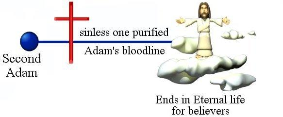 Second Adam eternal life on Women in Ministry blog by Cheryl Schatz