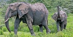_O5A2054 Mama and baby elephant web ready
