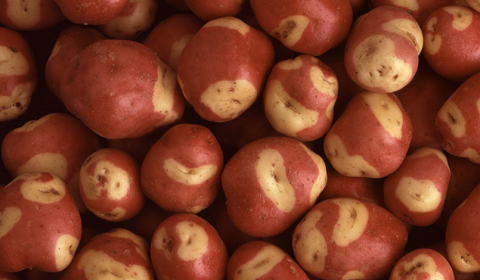 Robinson Fresh and Albert Bartlett bring premium potatoes to North America. (Photo: Albert Bartlett)