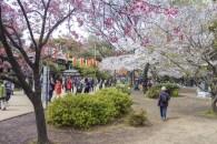 Tokyo-DSC_6925-b-kl_1