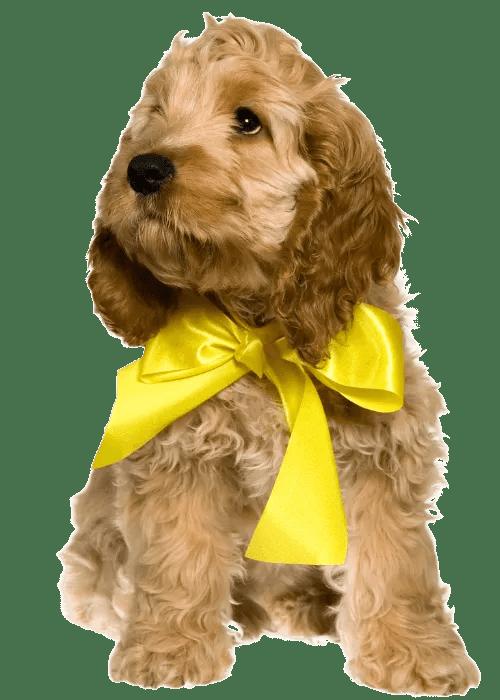 Yellow Ribbon Necktie Pup Transparent Background
