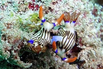 Dive Wild Kenya