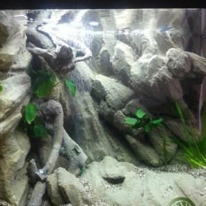 Décor de fond Amazonien Aquarium 100